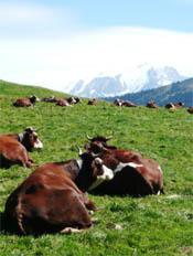 Laatste keer Mont Blanc